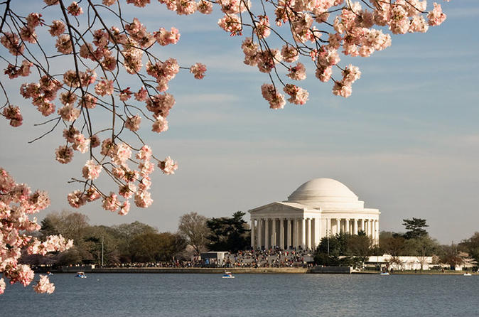 5-Day Washington DC Cherry Blossom Festival