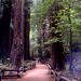 San Francisco Supersaver: Muir Woods and Wine Country Tour