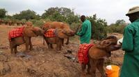 Giraffe Center and Elephant Orphanage Tour from Nairobi