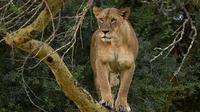 Nairobi Tour to the Lake Nakuru National Park