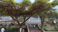 Addis Ababa Private Airport-Hotel Transfer Private Car Transfers