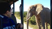 5-Day Garden Route and Addo Adventure from Cape Town to Port Elizabeth