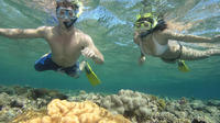 Half-Day Guided Snorkel and Beach Cruise in Philipsburg