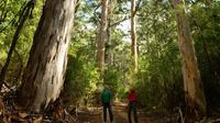 Half-Day Pemberton National Parks Beach and Forest Eco Adventure