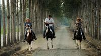 Day Trip To Hacienda La Danesa With Horseback Riding And Lunch