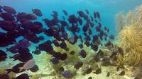 Certified Scuba Diving in Curacao