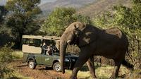 safari-dans-le-parc-national-a-pilanesberg