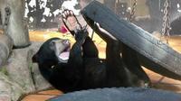 Full-Day Sepilok Orangutan and Sun Bear and Sandakan City Trail