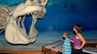Fossil And Shark Teeth Hunt Adventure Package With Lunch And Dinner