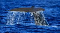 Half-Day Whale and Dolphin Watching Tour