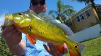 Peacock Bass All Day Fishing Trip near Palm Beach