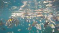 Barbados Fish and Swim Trip