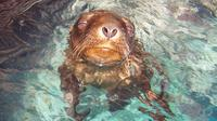 Swimming and Snorkeling with Sea Lions in the Sea of Cortez