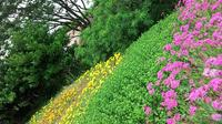 The World UNESCO Heritage Day Tour in Jeju Island - East Course