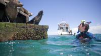 Half-Day Mornington Peninsula Dolphin and Seal Swim from Sorrento