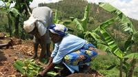 Banana Juice Making at a Local Community in Rwanda