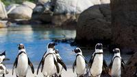 Private Tour: Cape of Good Hope and Cape Point from Cape Town