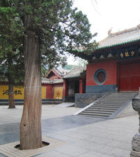 14-Day Shaolin Kung Fu Training Camp from Beijing