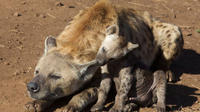 7-Day Private Tour of Kruger National Park