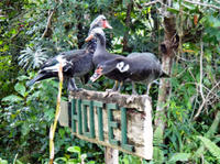 Eco-Village Tours from Belize City