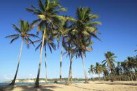 Dominican Republic Cultural Safari from Punta Cana