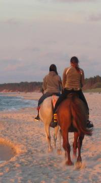 Horseback Beach Rides on Amelia Island