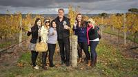 McLaren Vale Winery Small Group Tour from Adelaide Including Wine Tasting and Lunch