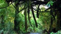 Alerce Andino National Park from Puerto Varas
