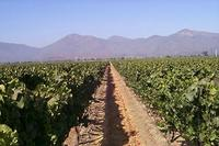 Full-Day Tour of Two Wineries in Casablanca Valley from Santiago