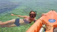 Kayak and Snorkel Tour from Flamingo Beach