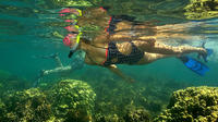 Kayak and Snorkel Tour in Tamarindo Beach from Flamingo Beach