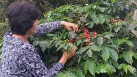 Pijao and Cordoba with Coffee Tasting