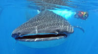 Whale Shark Encounter All-Inclusive Tour in Cancun