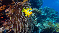 2 Day Dive Package