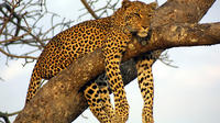 Private Day Trip to Yala National Park from Colombo