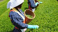 Green Tea Picking and Kawagoe Walking Tour Combo from Shinjuku