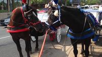 Philadelphia Horse Drawn Carriage Tour