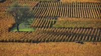 Half Day Tour of the Cote de Nuits Vineyards from Dijon