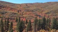 Mt Trumbull Day Trip