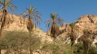 Private Tour: Masada and Dead Sea Day Tour from Tel Aviv