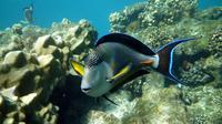 Sindbad Submarine Tour in Hurghada