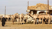 Small-Group Camel Market Day Tour from Cairo