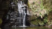 Horto Waterfalls Circuit Adventure Tour in Tijuca National Park