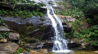 Tijuca Forest Hiking Tour Including Waterfalls