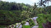 Private Tour: Ubud Sightseeing Tour