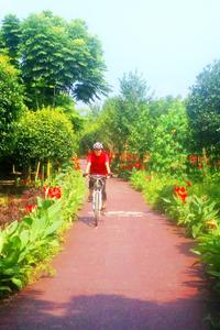 Private, Full-Day Biking and Sichuan Food Tour near Chengdu