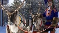 reindeer farm*