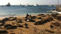 6-Day Galapagos Islands Adventure: Diving, Hiking and Snorkeling