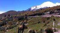 Horseback Riding at Cayambe Volcano from Quito
