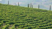 Monferrato Wine Tour